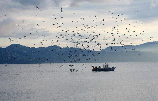 Evian-les-Bains, France: Рыбак на Лемане