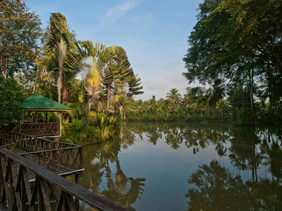 Sepilok Jungle Resort: One of the lakes on the property.