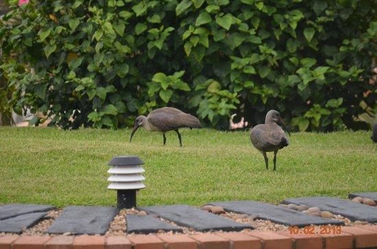 Villa Siesta: Birds visiting the garden