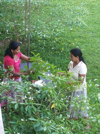 Nooit Gedacht Heritage Hotel: Staff gathering blossoms for bedroom decorations