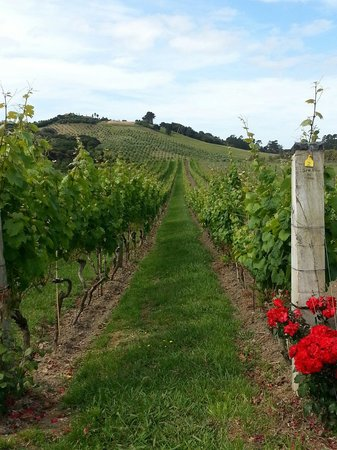 Stonyridge Vineyard: Vine