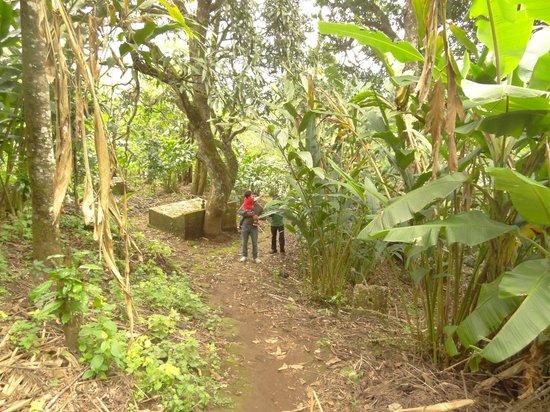 The Wind Munnar : small plantation near hotel