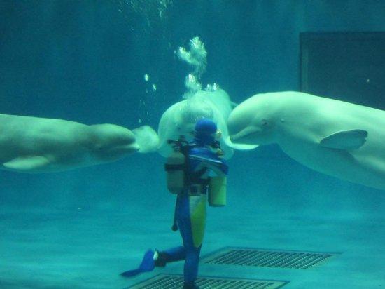 Aquas: みつどもえ