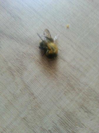 Hotel Aqua: Dead Bees