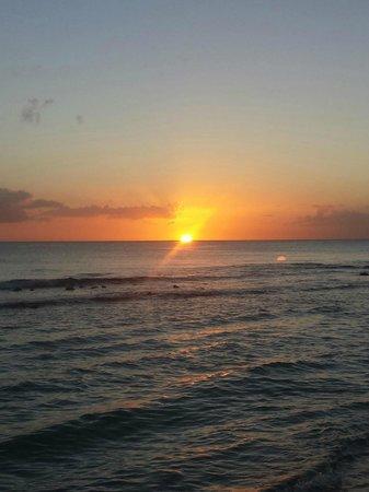Viva Wyndham Dominicus Beach : panorama