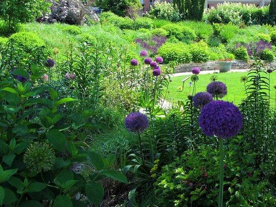 Allen Centennial Gardens: Alliums Foreground