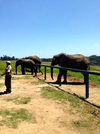 Elephant Sanctuary: Elephants