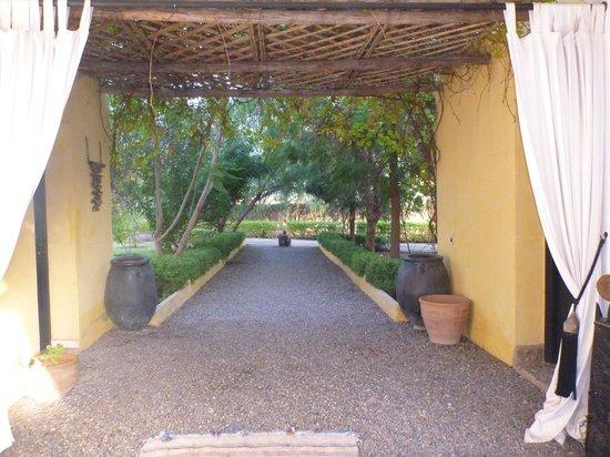 Fawakay Villas : THe gardens