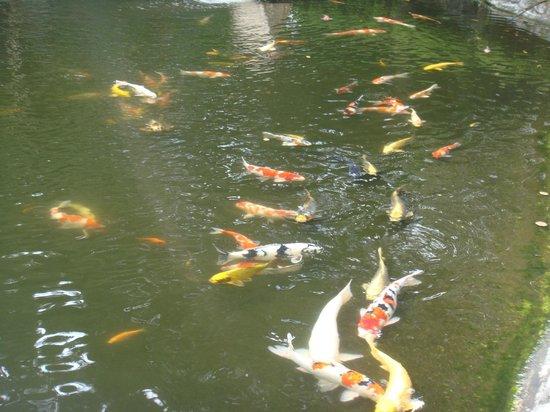 Grand Prince Hotel Takanawa : bassin au carpe dans le jardin de l'hotel