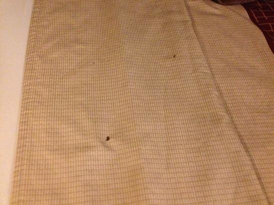 Red Roof Inn - El Paso East: cigarette burn holes on the bedspread