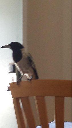 Best Western Karratha Central Apartments: Friendly birds to feed.