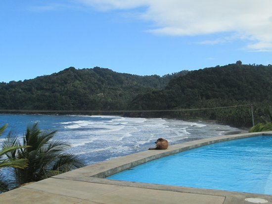 Pagua Bay House Oceanfront Cabanas: It's a dogs life!