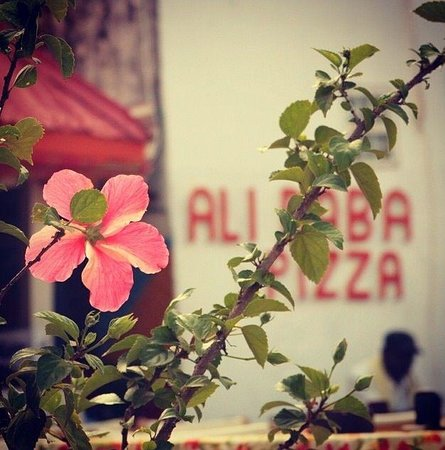 Ali Baba Restaurant and Garden: Alibaba garden kololi gambia