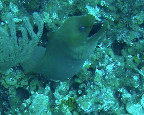 Belize Underwater : Eel
