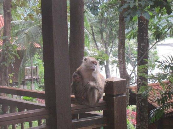 Berjaya Langkawi Resort - Malaysia: What a good mamma!