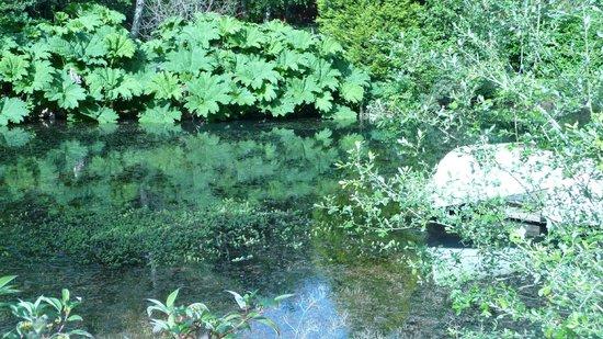 شيكارا هاوس: Gunnera surrounding the lake