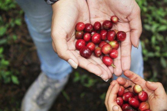 Tucanopy: Organic Coffe