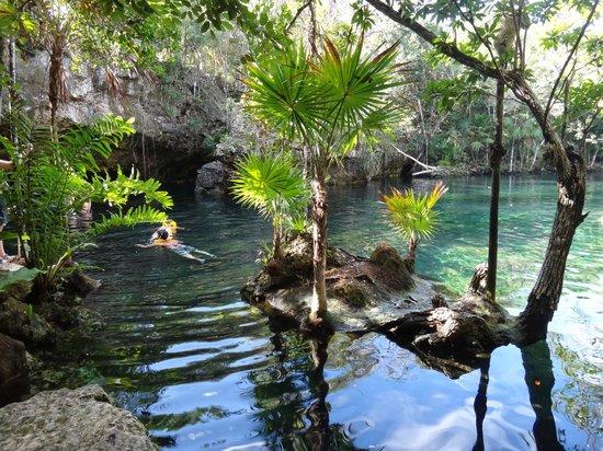 Cenote Chikin Ha: Colores y especies nadando junto a nosotros
