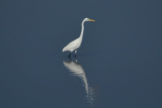 Khijadiya Bird Sanctuary : Highlight of park