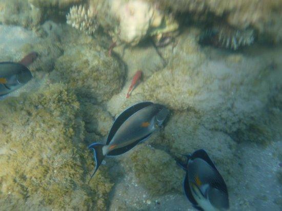 Aladdin Beach Resort: Подводный мир