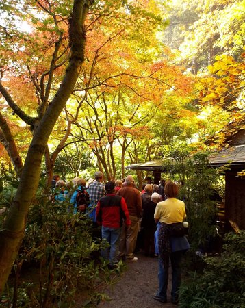 Portland Japanese Garden: There aren't many flowers in bloom in October, but the trees make up for it.