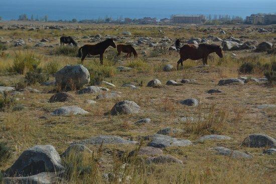 Museum of Petroglyphs Lake Issyk-Kul