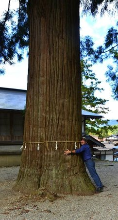 Hotel Associa Takayama Resort : tree huggin the massive cypress!
