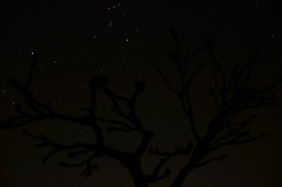 Ajitbagh : Starry Night
