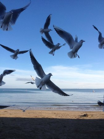 Swanage Bay View: Seagulls