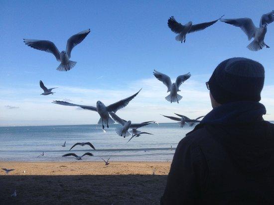 Swanage Bay View: Feeding the Birds