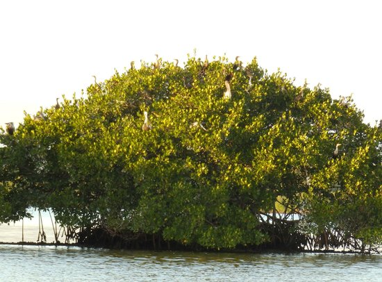 Everglades Backcountry Experience with Capt. Rodney Raffield: Birds Roost