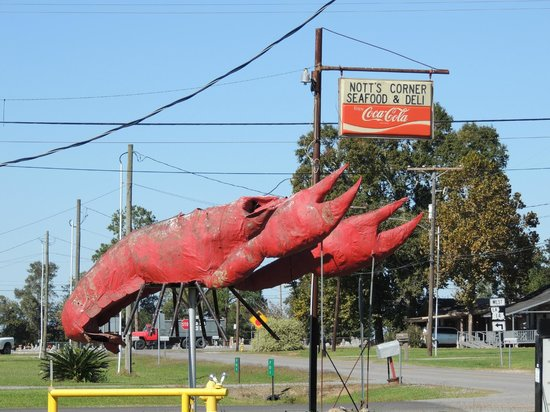 Nott's Corner: The world's biggest crawfish!
