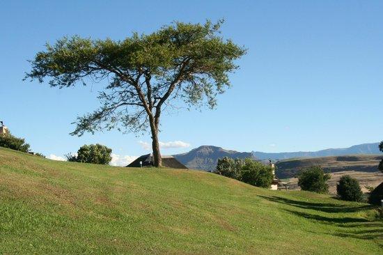 Montusi Mountain Lodge: Garten