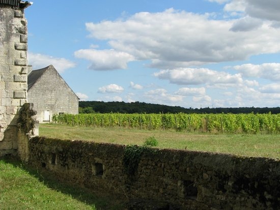 Le Tasting Room Wine - Day Tours: Château de Pimpéan vineyard
