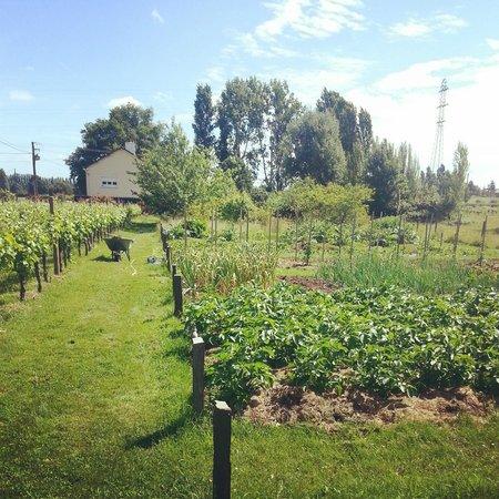 Chateau du Beugnon: The Vegetable Garden