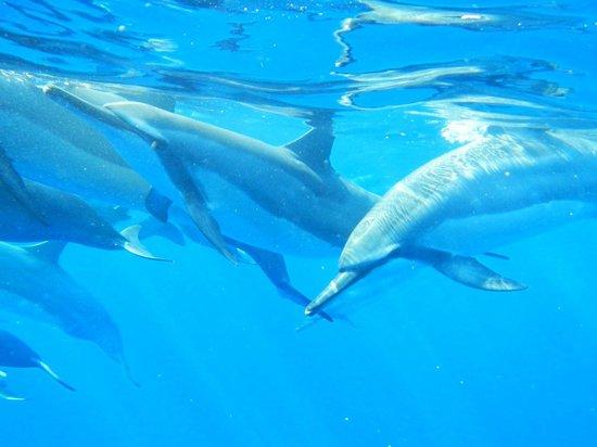 "Coral Reef Snorkel Adventures : ""Excuse us"""