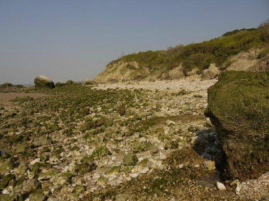 Falaise des Vaches Noires : During low tide