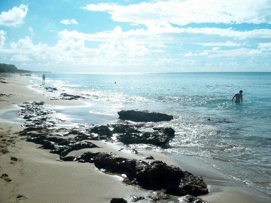 Sand Castle on the Beach: beach