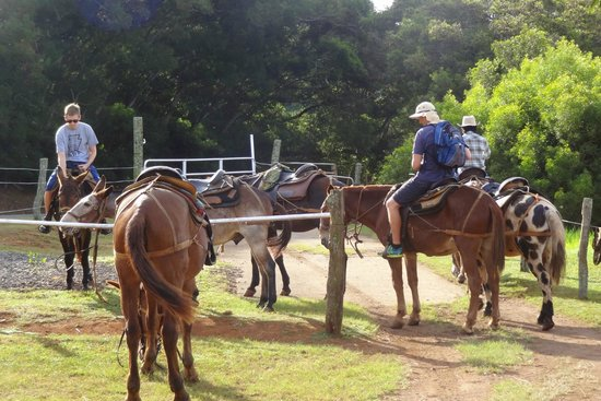 Molokai Mule Ride: During the mule match-up process