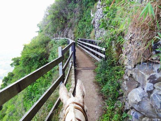Molokai Mule Ride: Crossing over a bridge