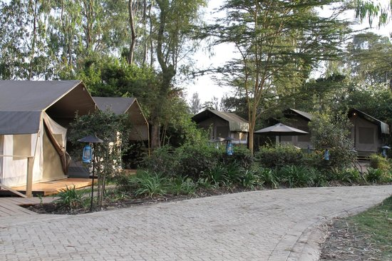 Wildebeest Eco Camp: Different views of accommodation