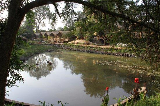 Wildebeest Eco Camp: The pond