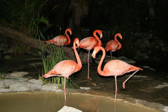 IFA Villas Bavaro Resort & Spa: flamands rose