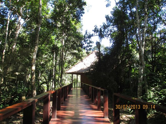 Posada Amazonas : This was the view along the timber board walk - beautiful