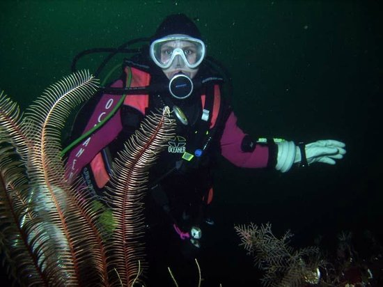 Nanaimo Dive Outfitters: Awesome underwater