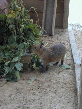 Quistacocha Zoo: Alguns animais vivem soltos pelo parque