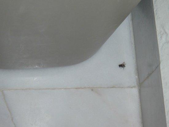 Park Royal Cancun: Mosca morta no banheiro por dois dias