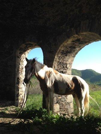 Equus Rides: Sundance