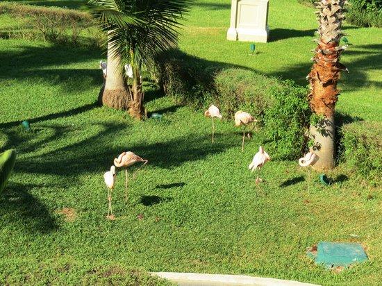 Pueblo Bonito Emerald Bay: Flamingo's