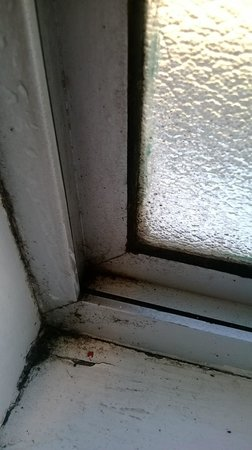 Biddy Kate's Backpackers: bathroom window